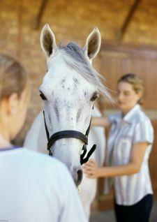 Médecine : On manipule bien les chevaux