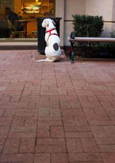 Mon chien peut-il m'accompagner partout ?