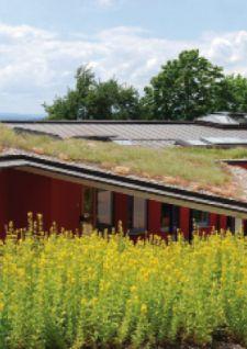 Les toits végétaux prennent racine