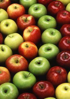 Portrait : La pomme
