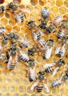 Du miel à Jarville