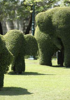 Un arbuste qui a du chien…