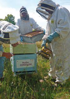 Sarah & les abeilles