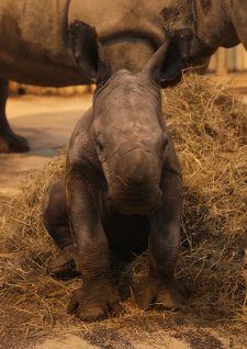 Naissance miracle au Zoo d'Amnéville
