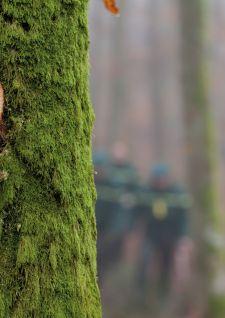 Le hêtre: l'or vert des Vosges