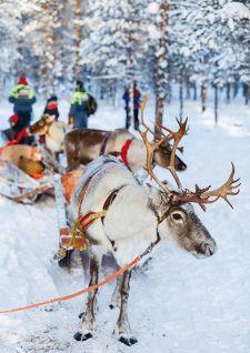 Voyage au pays magique du père Noël