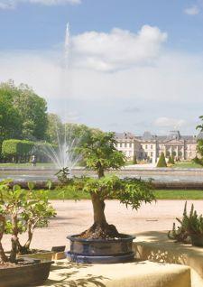 Fête des plantes à Lunéville