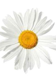 Semer des fleurs annuelles en avril