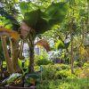 Un air de fête au Jardin botanique!
