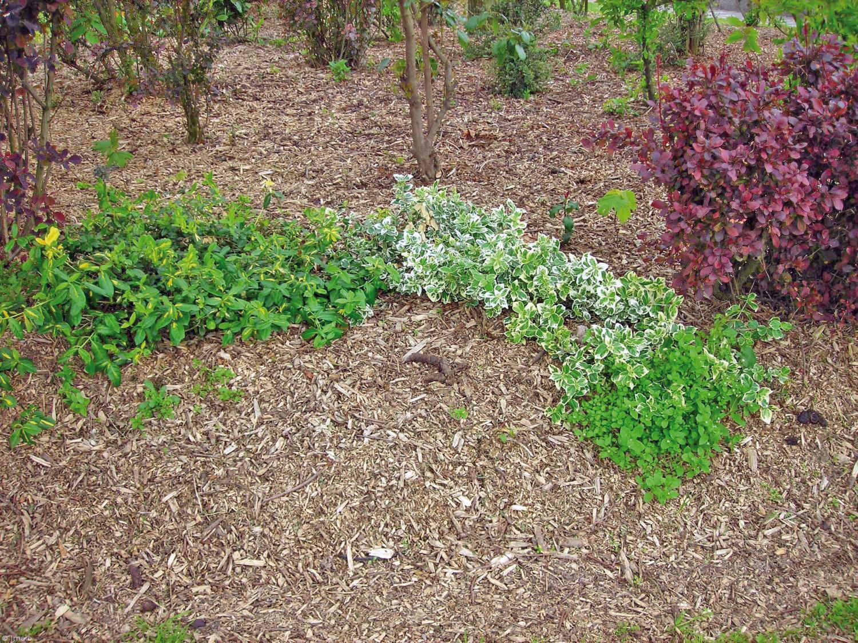 Pr parer l hiver au jardin lorraine magazine for Hiver au jardin