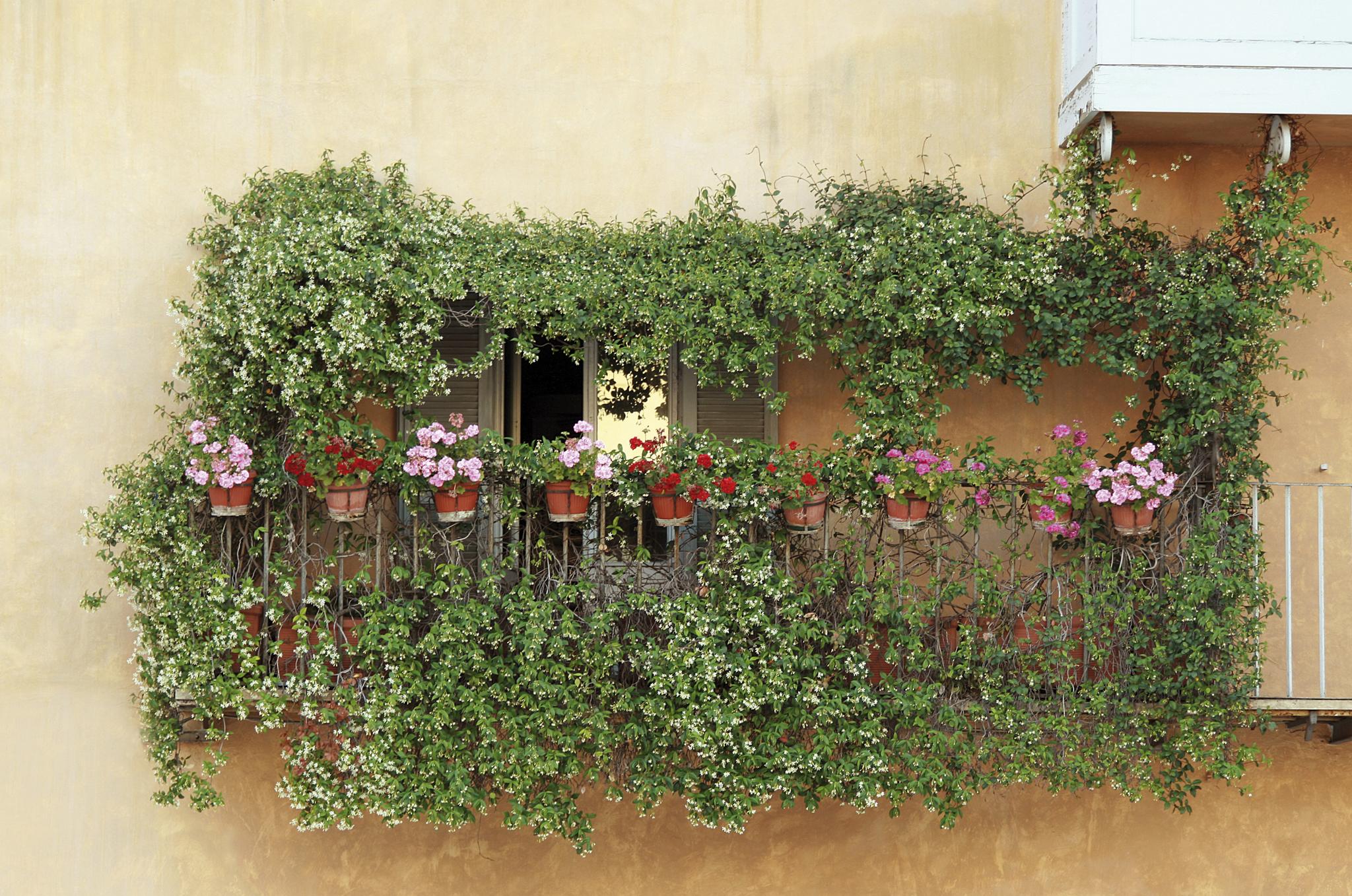 Brise Vue En Lierre quels végétaux pour se couper de la vue et du bruit