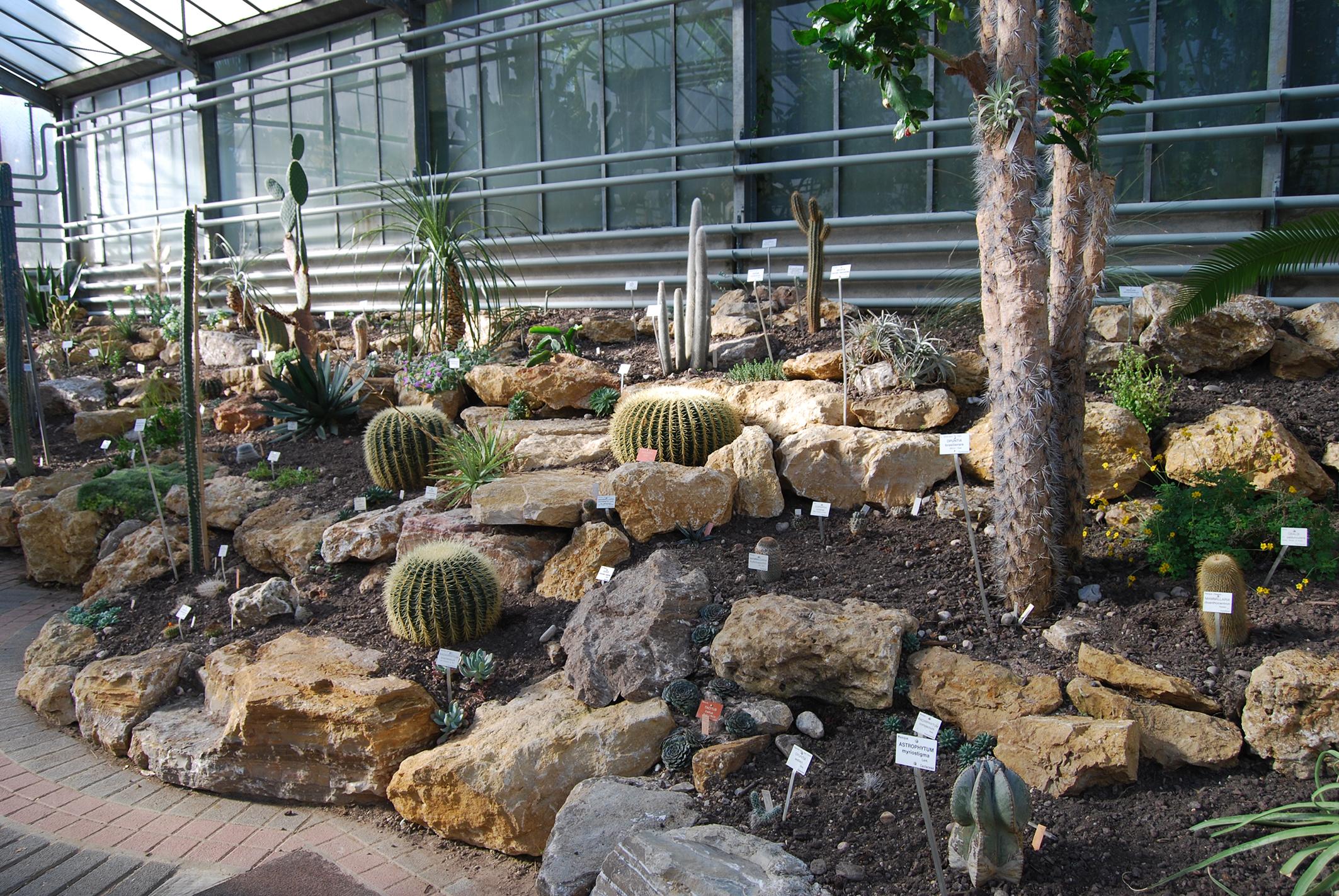 Relooking dans la serre des cactus et id es cadeaux au for Jardin botanique nancy