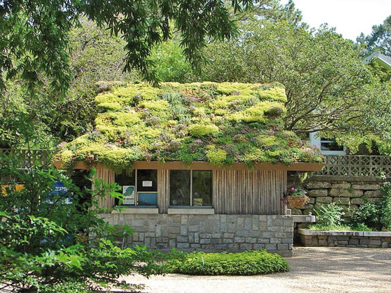 une toiture v g tale pour mon abri de jardin lorraine magazine. Black Bedroom Furniture Sets. Home Design Ideas