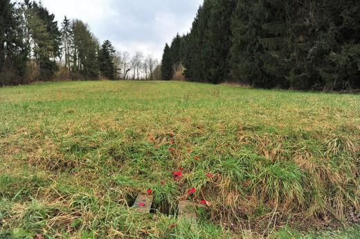 Les pétales de fleur de Mme Baumann - Crédits P.S. - G.L.