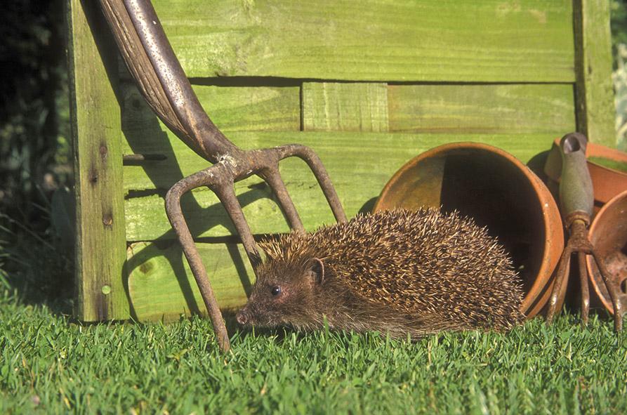 Des animaux de basse cour dans mon jardin lorraine magazine for Poules d ornement pour le jardin ou la basse cour