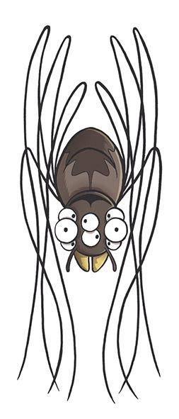 araign
