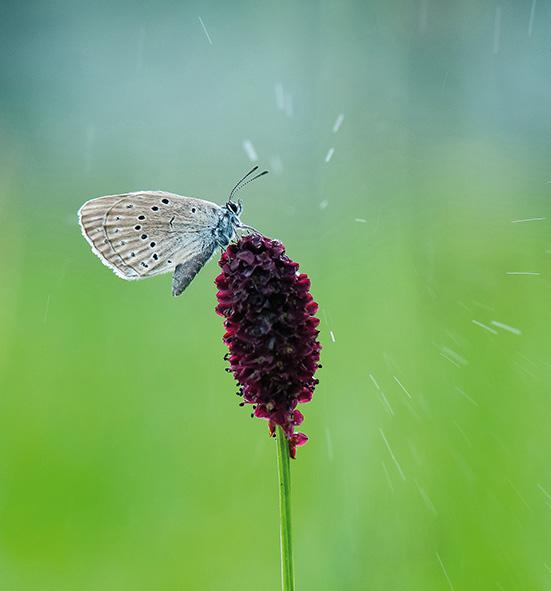 Pas de papillons datant